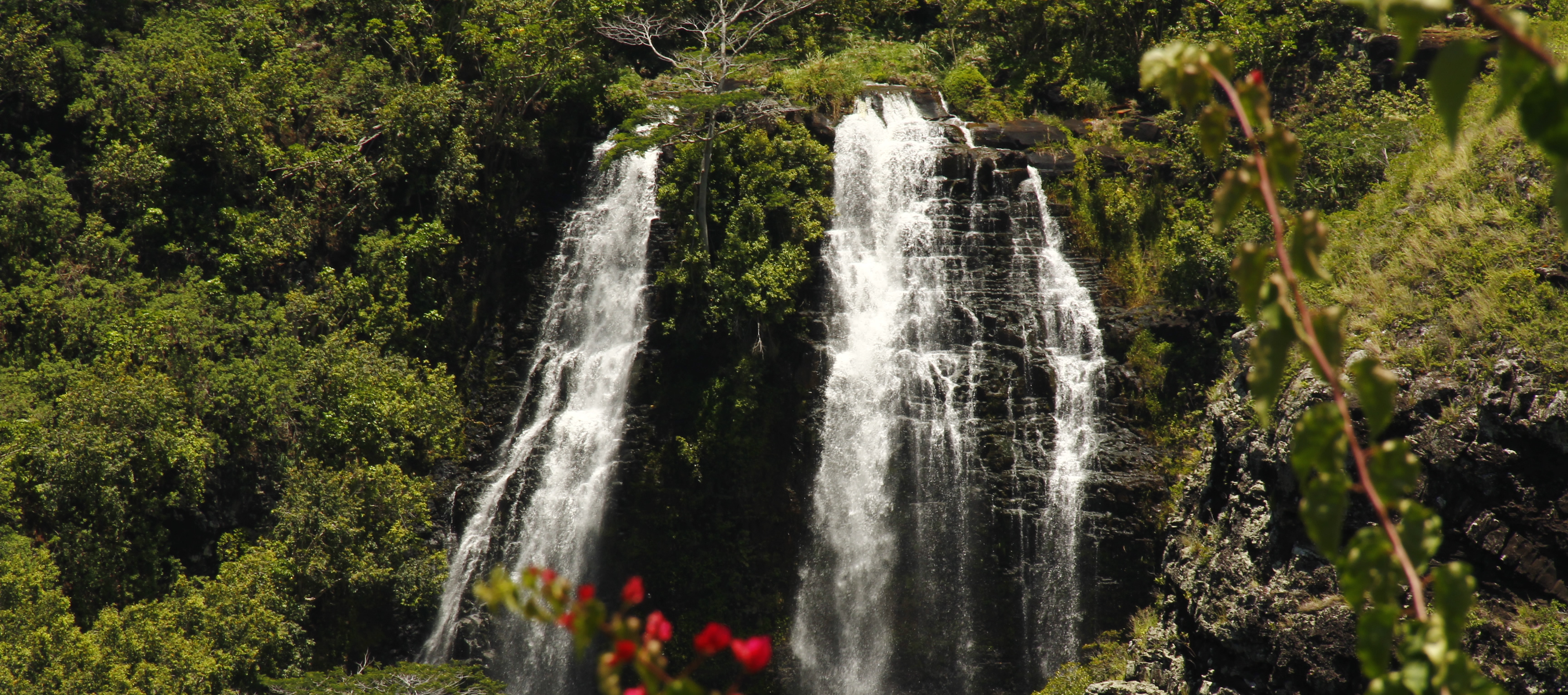 The 7 Best Easy To View Waterfalls In Kauai With Map