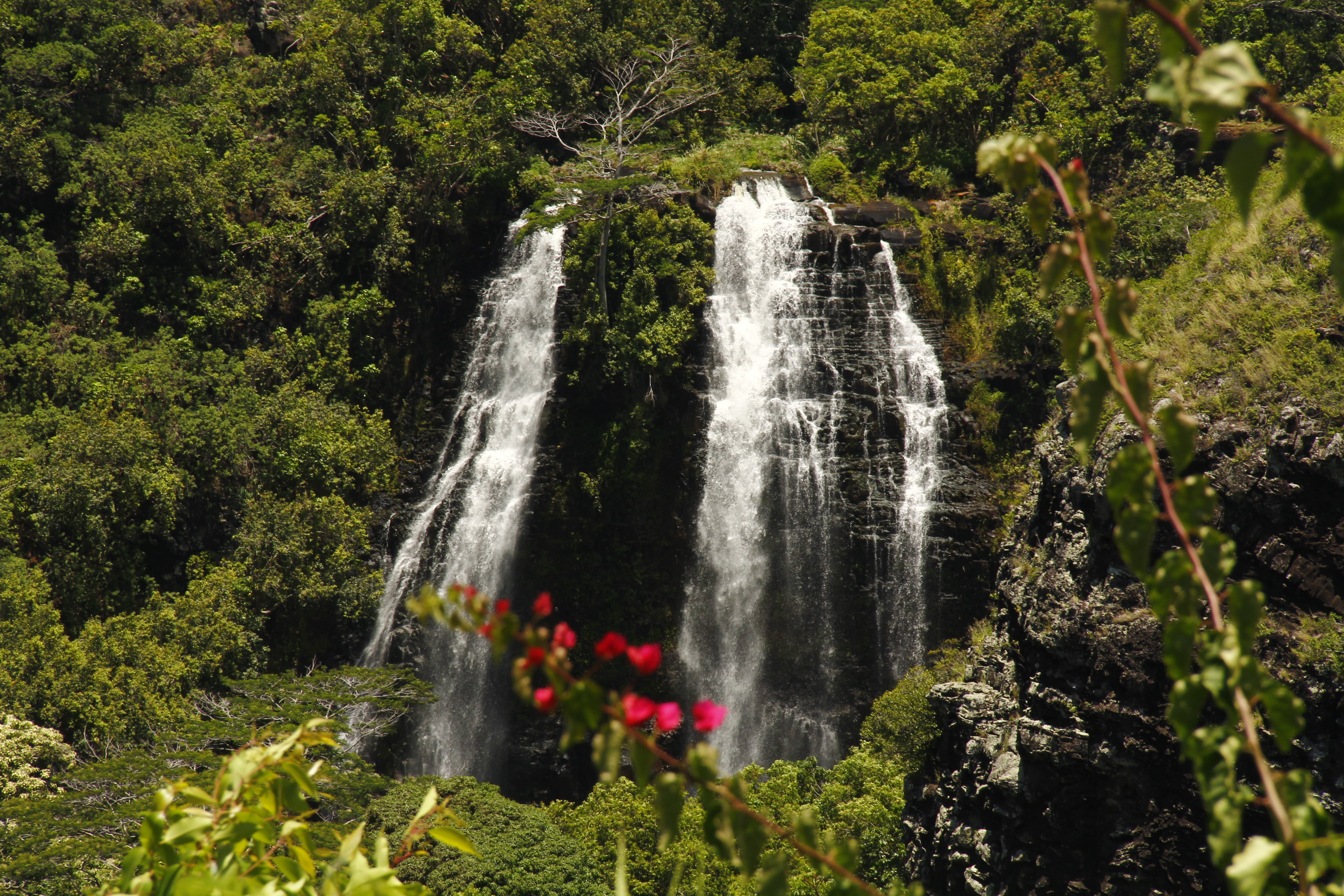 7 best easy to view waterfalls in kauai for Waterfall it
