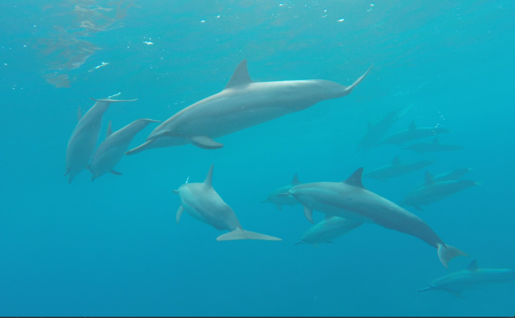 A pod of dolphins along the na pali coast of Kauai