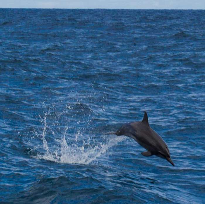 Na Pali Tours - Dolphins